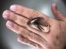 Кварц с включениями турмалина кабошон триллион, вес 58.19 карат, размер 38.2х21.2мм (quartzinct0025)